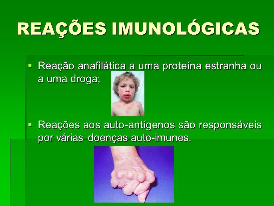 REAÇÕES IMUNOLÓGICAS Reação anafilática a uma proteína estranha ou a uma droga; Reação anafilática a uma proteína estranha ou a uma droga; Reações aos auto-antígenos são responsáveis por várias doenças auto-imunes.