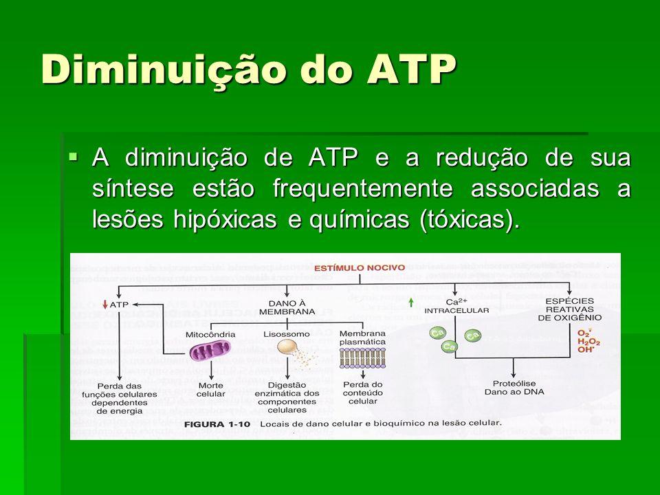 A diminuição de ATP e a redução de sua síntese estão frequentemente associadas a lesões hipóxicas e químicas (tóxicas).