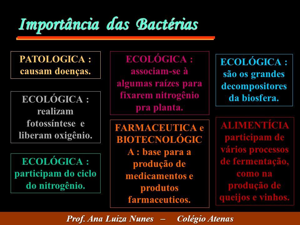Importância das Bactérias PATOLOGICA : causam doenças. ECOLÓGICA : realizam fotossíntese e liberam oxigênio. ECOLÓGICA : participam do ciclo do nitrog