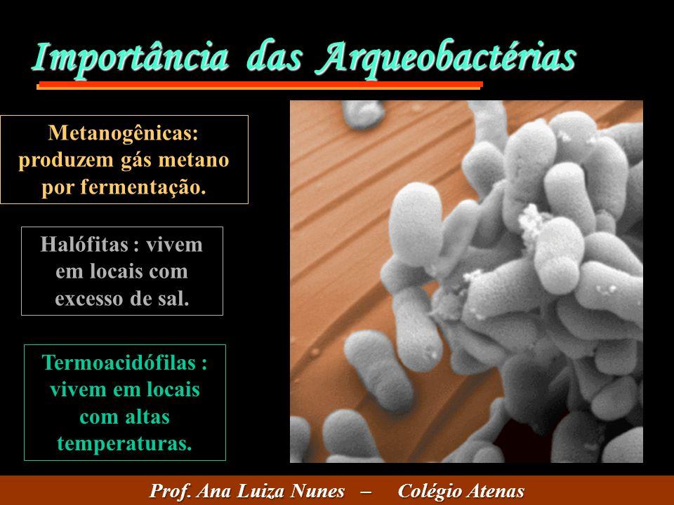 Importância das Arqueobactérias Metanogênicas: produzem gás metano por fermentação.