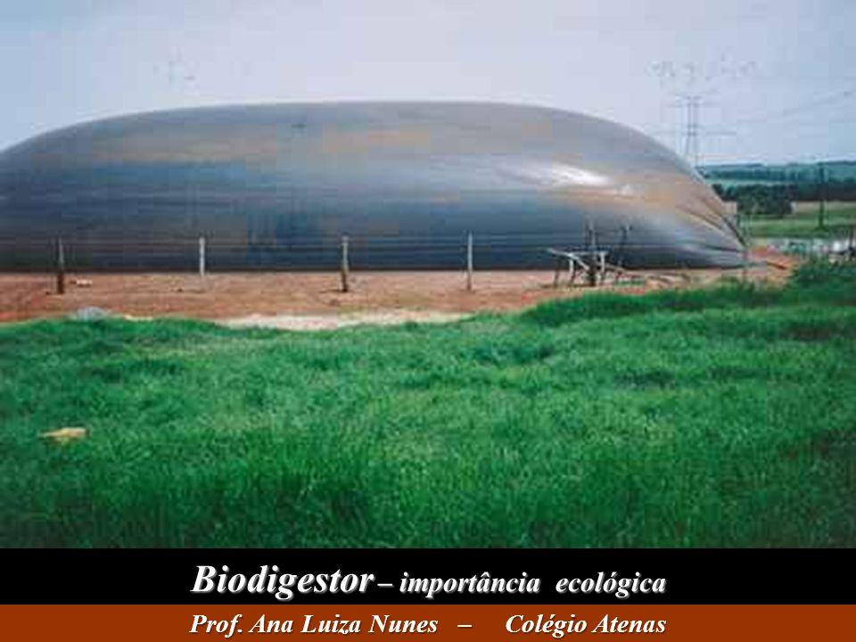 Biodigestor – importância ecológica Prof. Ana Luiza Nunes – Colégio Atenas