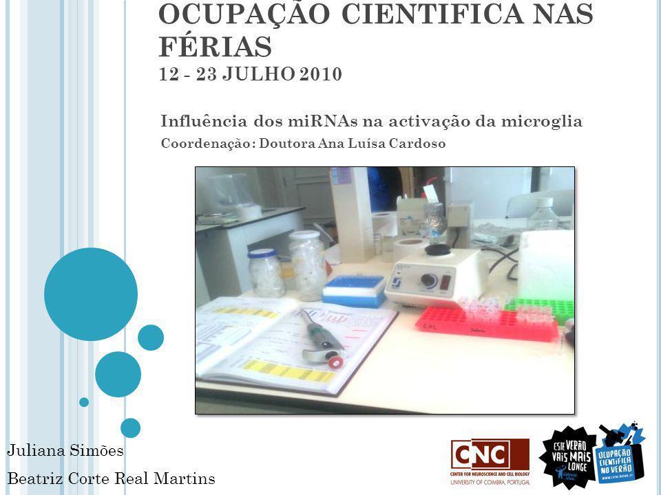 OCUPAÇÃO CIENTIFICA NAS FÉRIAS 12 - 23 JULHO 2010 Influência dos miRNAs na activação da microglia Coordenação : Doutora Ana Luísa Cardoso Juliana Simõ