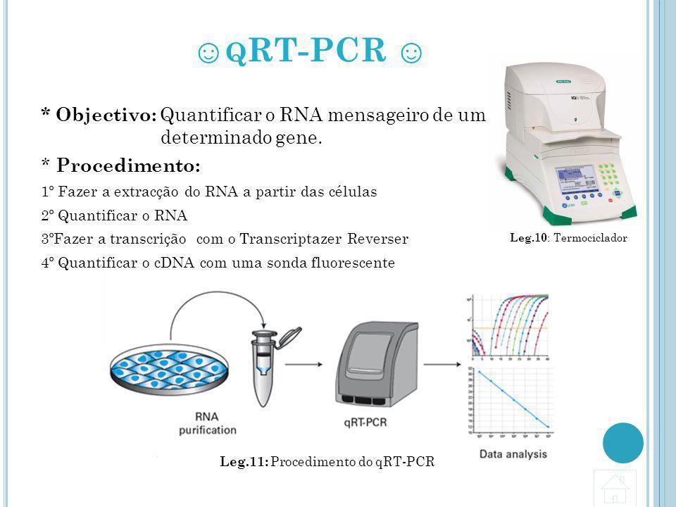 Q RT-PCR * Objectivo: Quantificar o RNA mensageiro de um determinado gene. * Procedimento: 1º Fazer a extracção do RNA a partir das células 2º Quantif