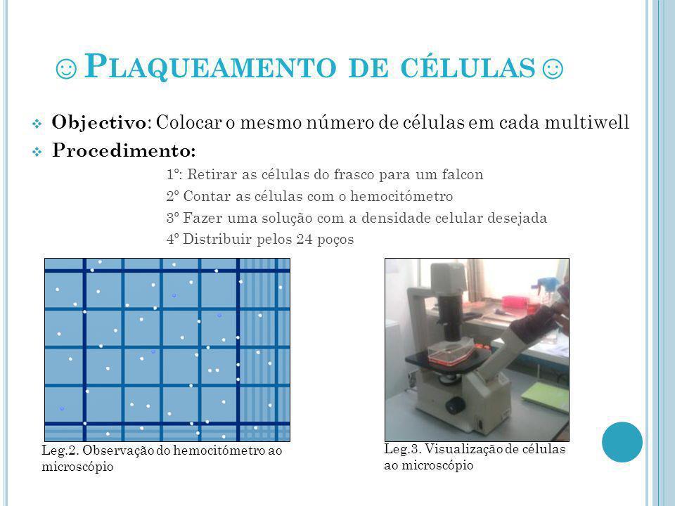 P LAQUEAMENTO DE CÉLULAS Objectivo : Colocar o mesmo número de células em cada multiwell Procedimento: 1º: Retirar as células do frasco para um falcon