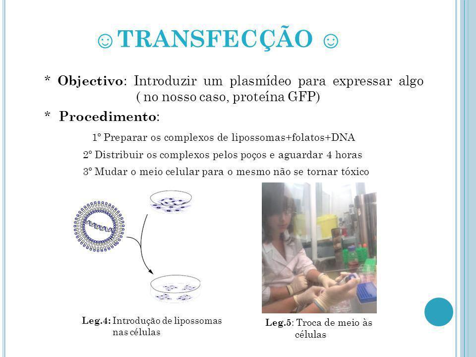 TRANSFECÇÃO * Objectivo : Introduzir um plasmídeo para expressar algo ( no nosso caso, proteína GFP) * Procedimento : 1º Preparar os complexos de lipo