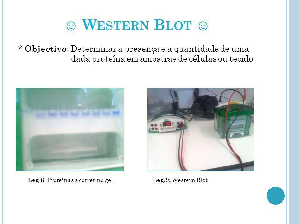 W ESTERN B LOT * Objectivo : Determinar a presença e a quantidade de uma dada proteína em amostras de células ou tecido. Leg.8 : Proteínas a correr no