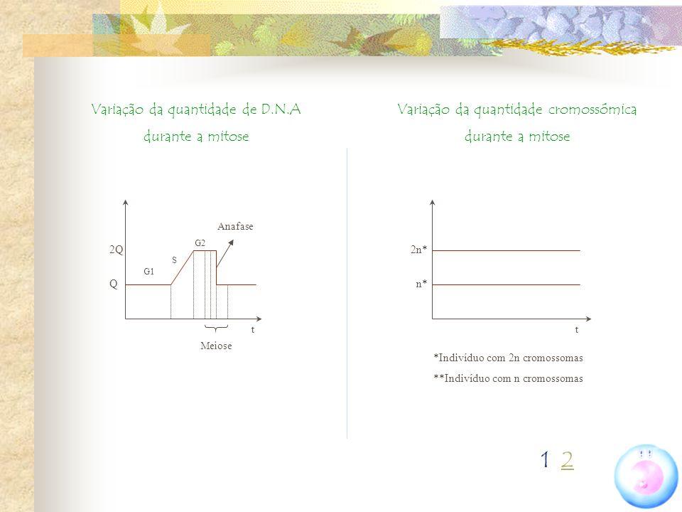 Variação da quantidade de D.N.A durante a mitose Variação da quantidade cromossómica durante a mitose t 2Q Q t G1 S G2 Meiose Anafase 2n* n* *Indivídu