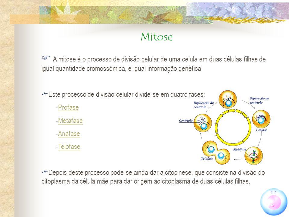 Mitose A mitose é o processo de divisão celular de uma célula em duas células filhas de igual quantidade cromossómica, e igual informação genética. Es