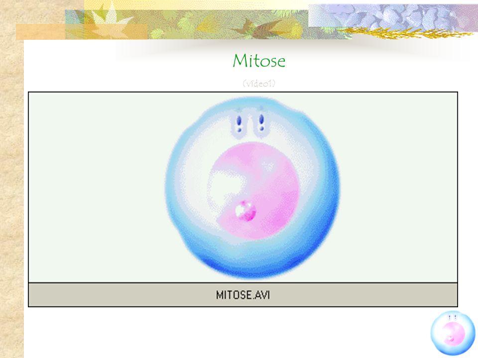 Mitose (vídeo1)