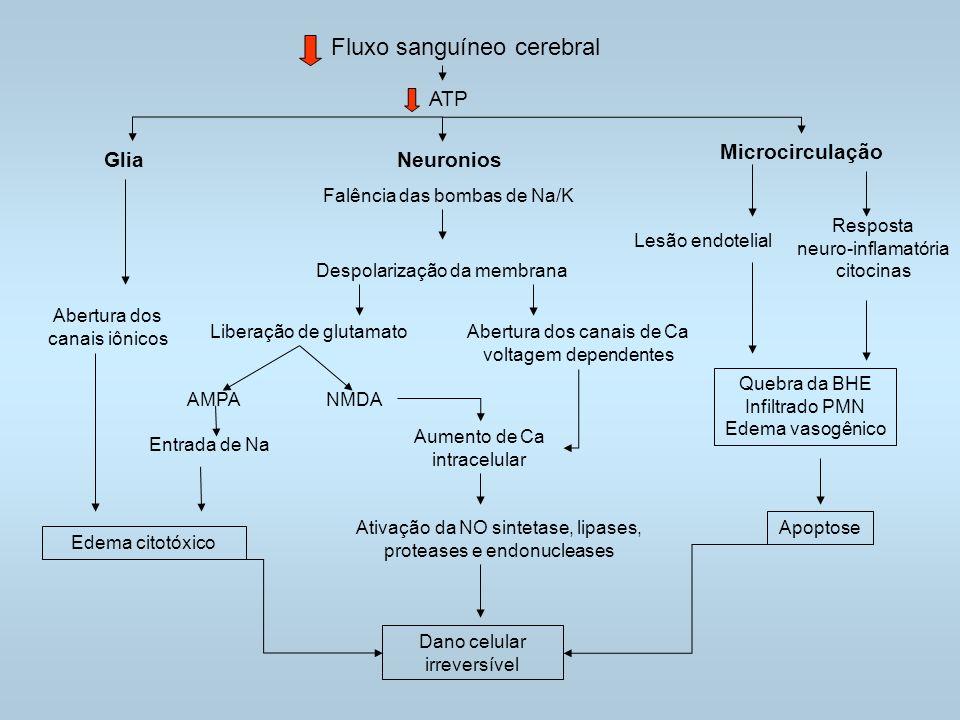Fluxo sanguíneo cerebral ATP GliaNeuronios Falência das bombas de Na/K Microcirculação Abertura dos canais iônicos Despolarização da membrana Liberação de glutamatoAbertura dos canais de Ca voltagem dependentes Edema citotóxico Dano celular irreversível Apoptose AMPA Entrada de Na Lesão endotelial Resposta neuro-inflamatória citocinas Quebra da BHE Infiltrado PMN Edema vasogênico NMDA Aumento de Ca intracelular Ativação da NO sintetase, lipases, proteases e endonucleases