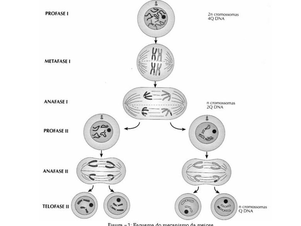 Citocinese vegetal e animal