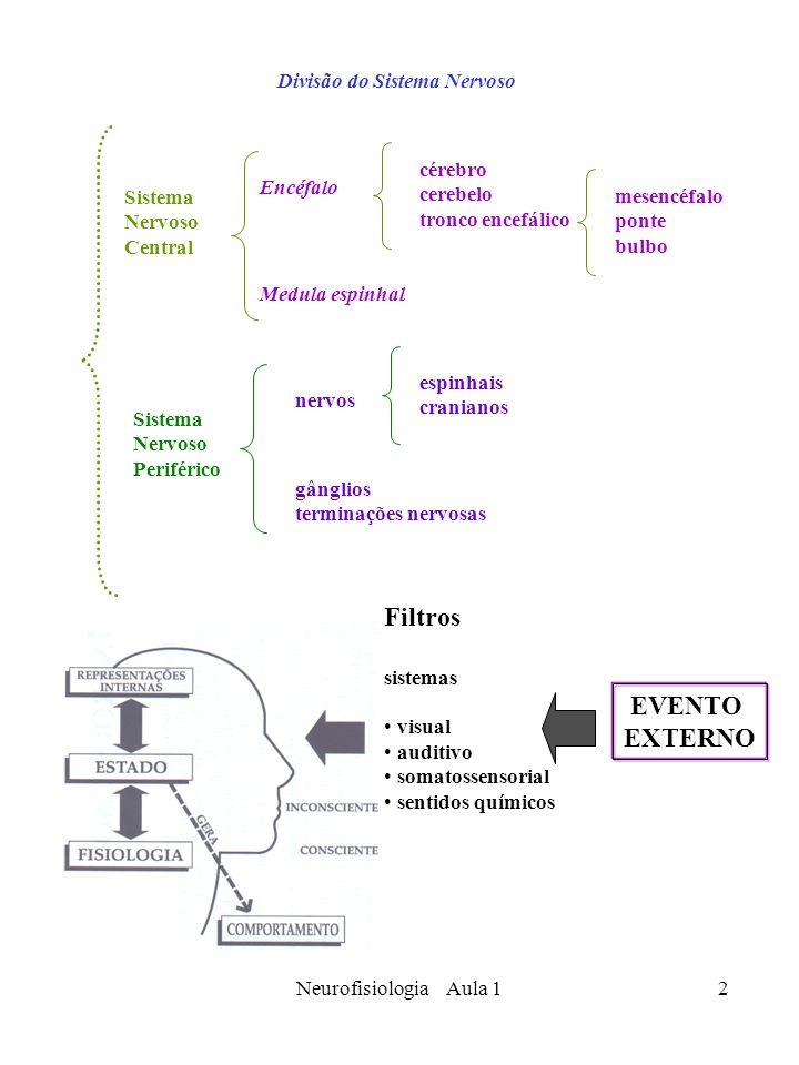 Neurofisiologia Aula 12 Divisão do Sistema Nervoso Sistema Nervoso Central Encéfalo cérebro cerebelo tronco encefálico mesencéfalo ponte bulbo Medula
