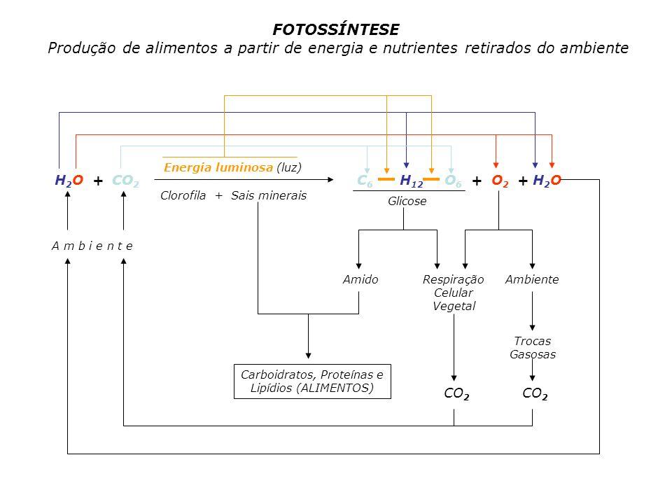 H 2 O + CO 2 Energia luminosa (luz) Clorofila + Sais minerais C 6 H 12 O 6 + O 2 + H 2 O A m b i e n t e AmidoRespiração Celular Vegetal Glicose Carbo