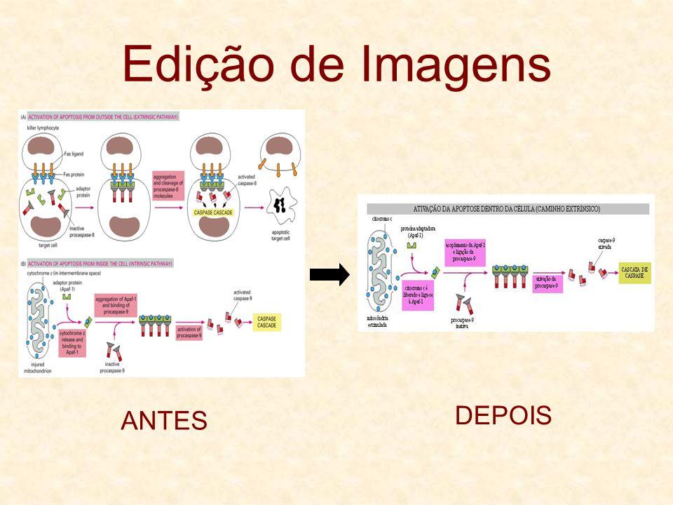 Edição de Imagens ANTES DEPOIS