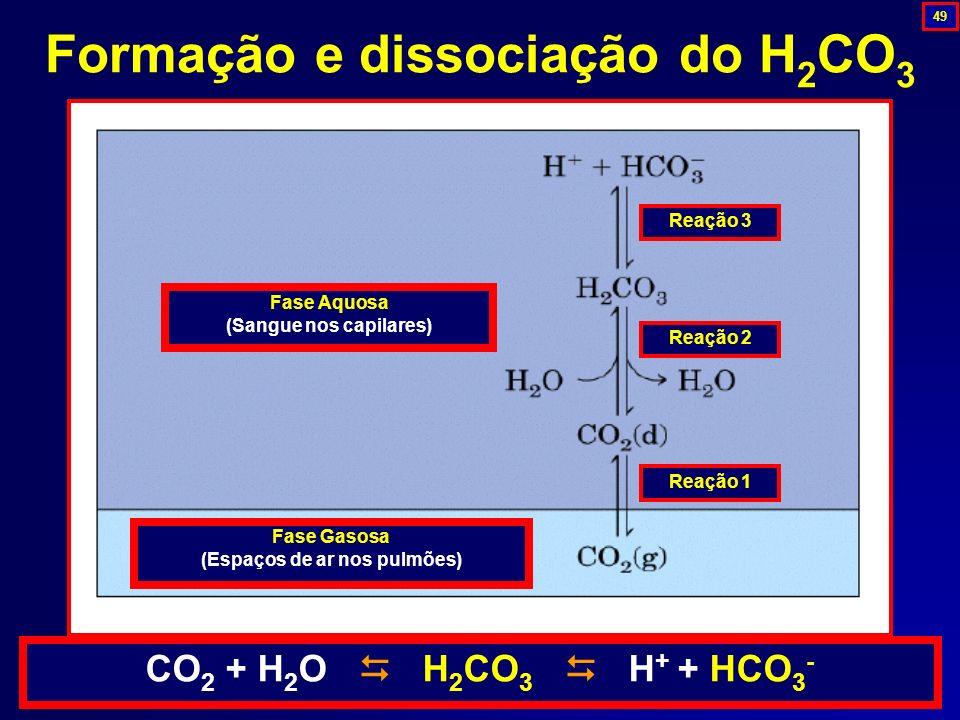 Formação e dissociação do H 2 CO 3 Reação 1 Reação 2 Reação 3 Fase Aquosa (Sangue nos capilares) Fase Gasosa (Espaços de ar nos pulmões) CO 2 + H 2 O