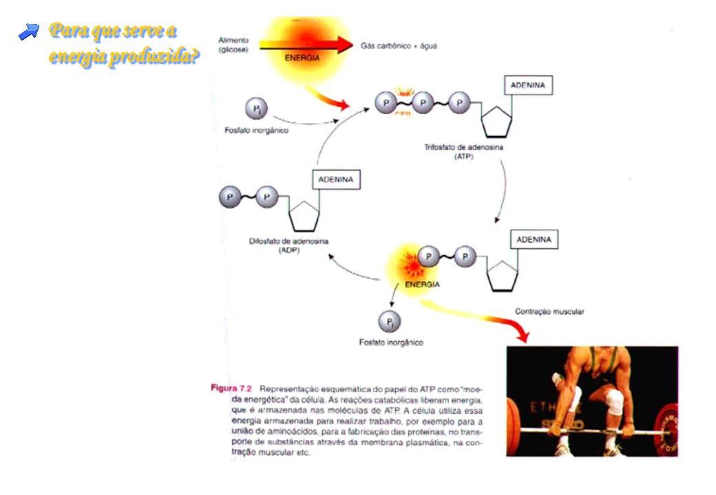 Para que serve a energia produzida? Para que serve a energia produzida?