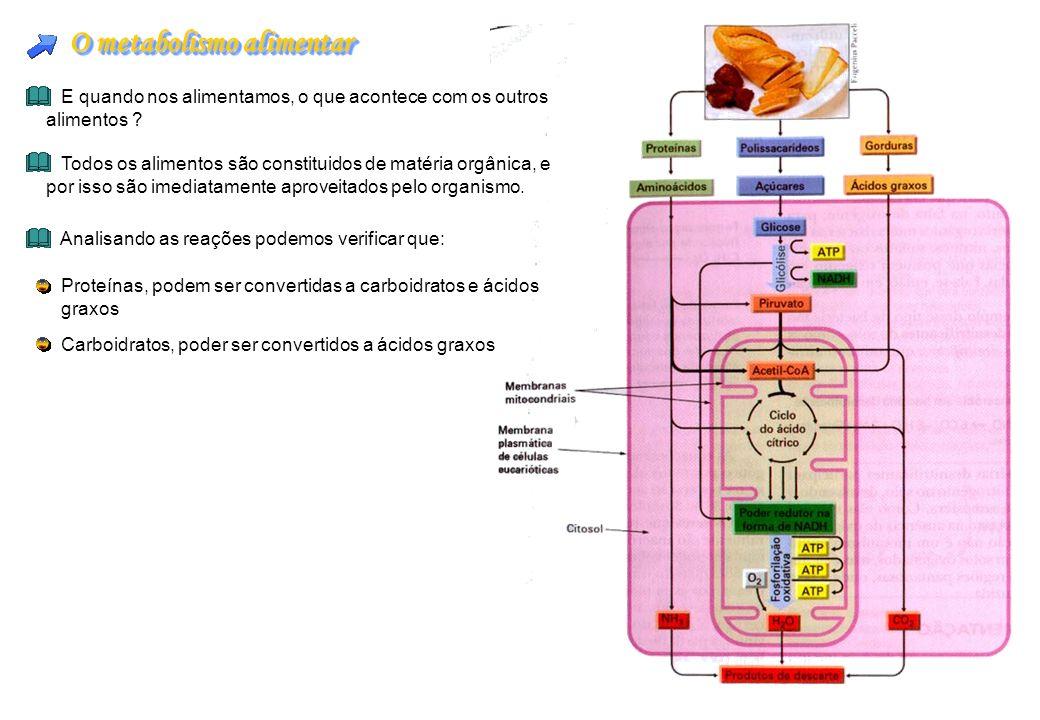 O metabolismo alimentar E quando nos alimentamos, o que acontece com os outros alimentos ? Todos os alimentos são constituidos de matéria orgânica, e