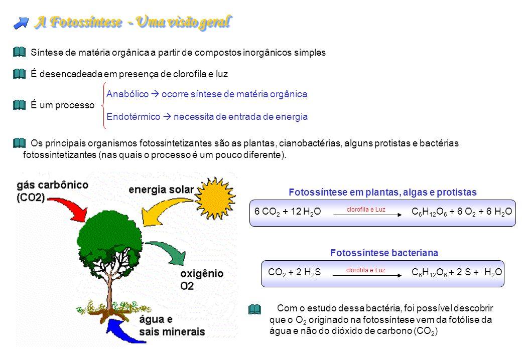 A Fotossíntese - Uma visão geral Síntese de matéria orgânica a partir de compostos inorgânicos simples É desencadeada em presença de clorofila e luz É