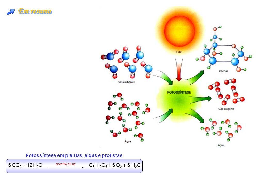 Em resumo 6 CO 2 + 12 H 2 O clorofila e Luz C 6 H 12 O 6 + 6 O 2 + 6 H 2 O Fotossíntese em plantas, algas e protistas