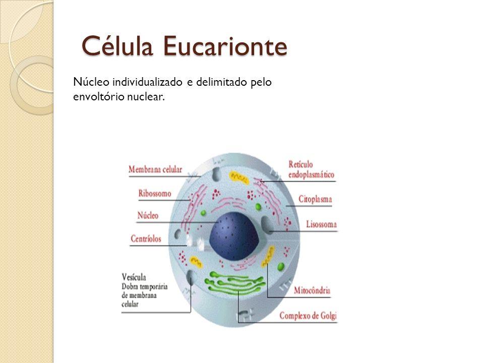 Estudo das organelas celulares - Mitocôndria: Liberar energia gradualmente das moléculas de ácido graxos e glicose, proveniente dos alimentos, produzindo calor e ATP para as atividades celulares.