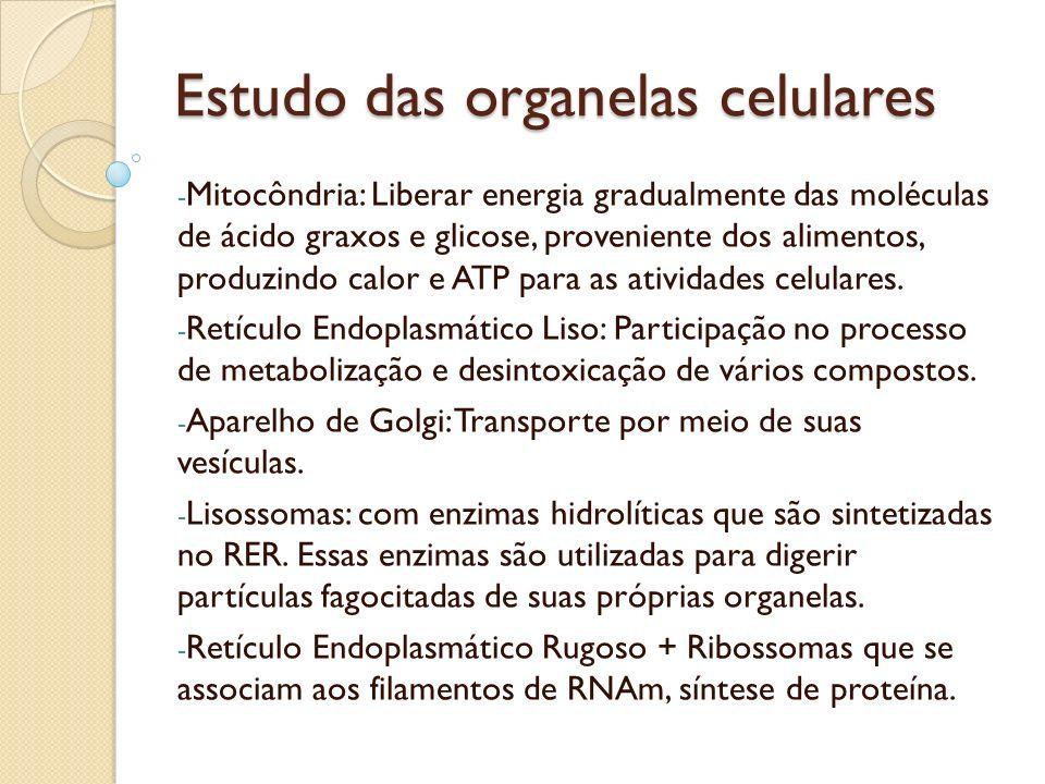 Estudo das organelas celulares Microtúbulos: transporte intracelular de partículas, deslocamento de cromossomos na mitose, manutenção na forma da célula.