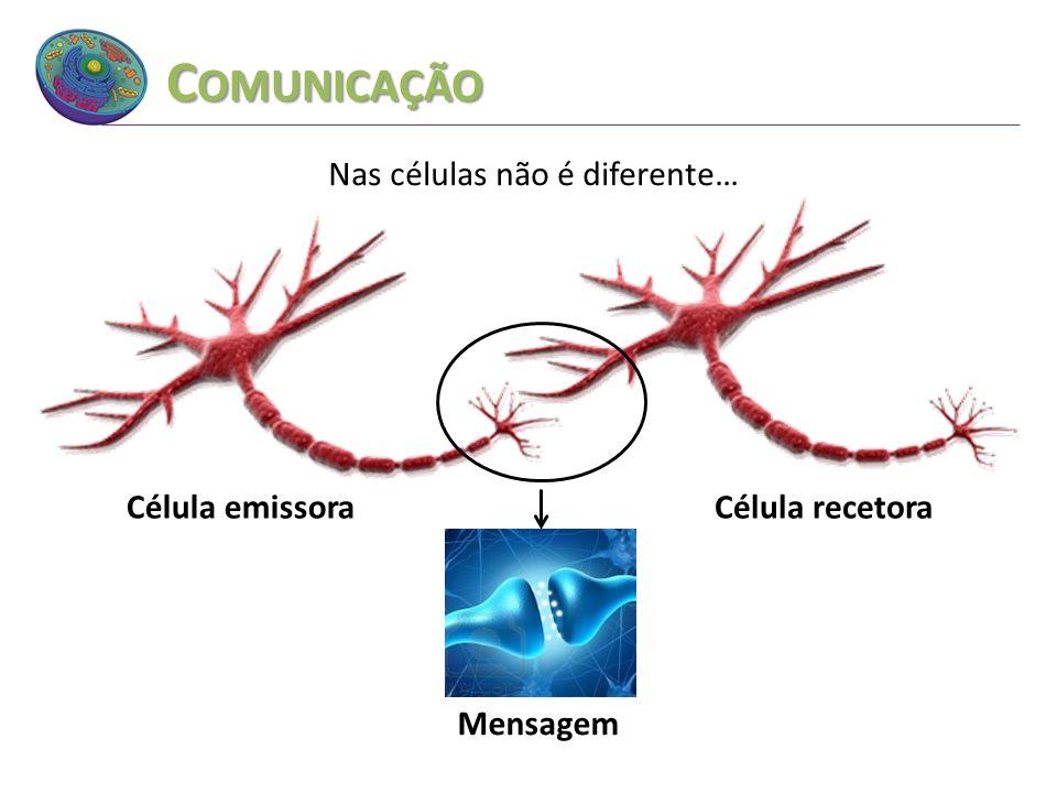 C OMUNICAÇÃO Nas células não é diferente… Célula emissora Mensagem Célula recetora