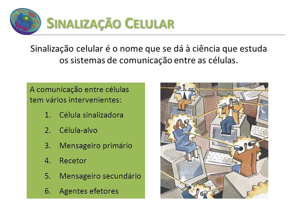S INALIZAÇÃO C ELULAR Sinalização celular é o nome que se dá à ciência que estuda os sistemas de comunicação entre as células. A comunicação entre cél