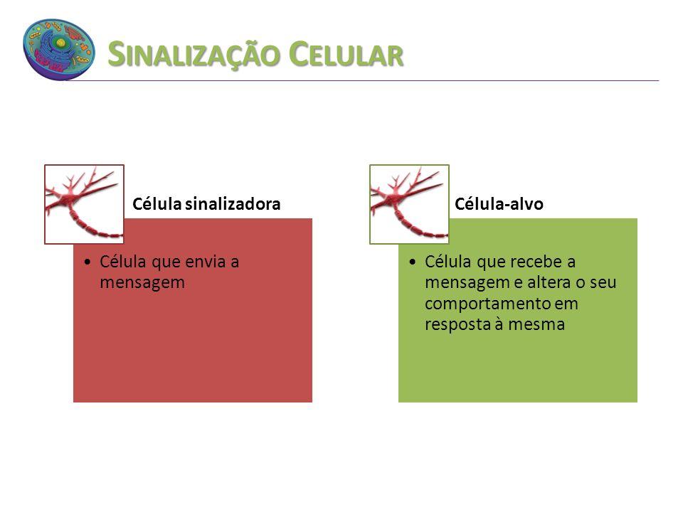 S INALIZAÇÃO C ELULAR Célula sinalizadora Célula que envia a mensagem Célula-alvo Célula que recebe a mensagem e altera o seu comportamento em respost