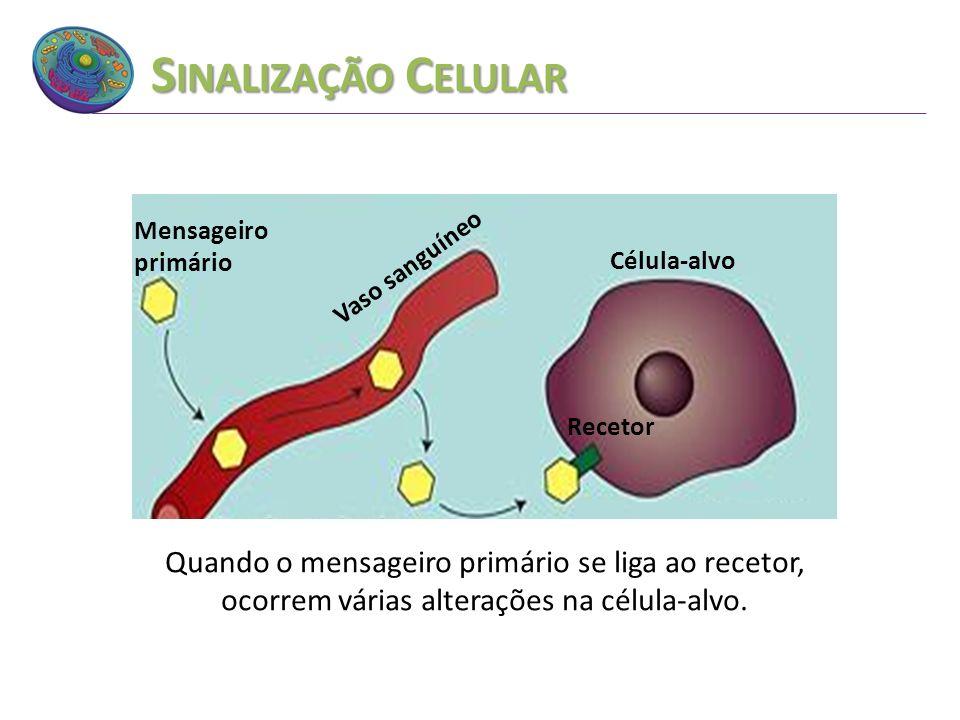 S INALIZAÇÃO C ELULAR Quando o mensageiro primário se liga ao recetor, ocorrem várias alterações na célula-alvo. Vaso sanguíneo Mensageiro primário Cé