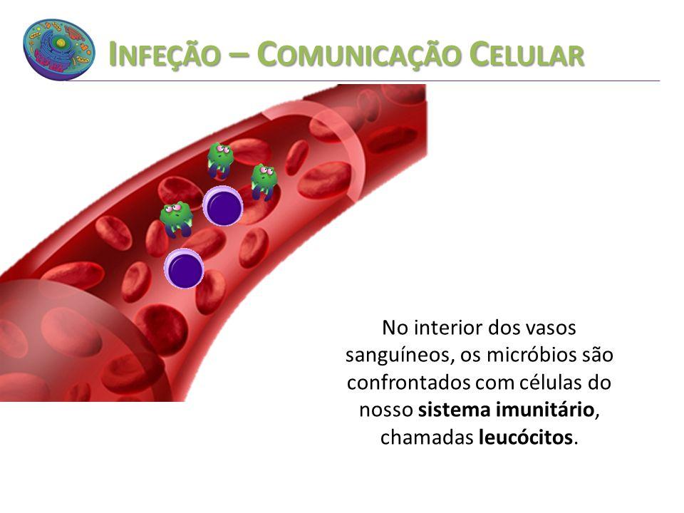 I NFEÇÃO – C OMUNICAÇÃO C ELULAR No interior dos vasos sanguíneos, os micróbios são confrontados com células do nosso sistema imunitário, chamadas leu