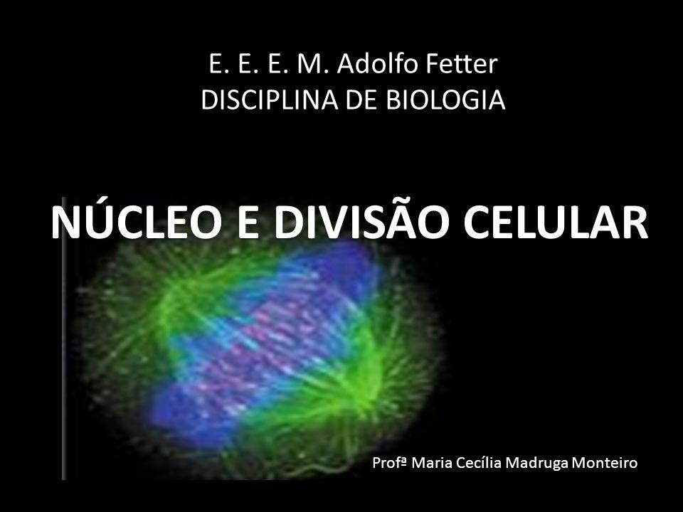 E. E. E. M. Adolfo Fetter DISCIPLINA DE BIOLOGIA NÚCLEO E DIVISÃO CELULAR Profª Maria Cecília Madruga Monteiro