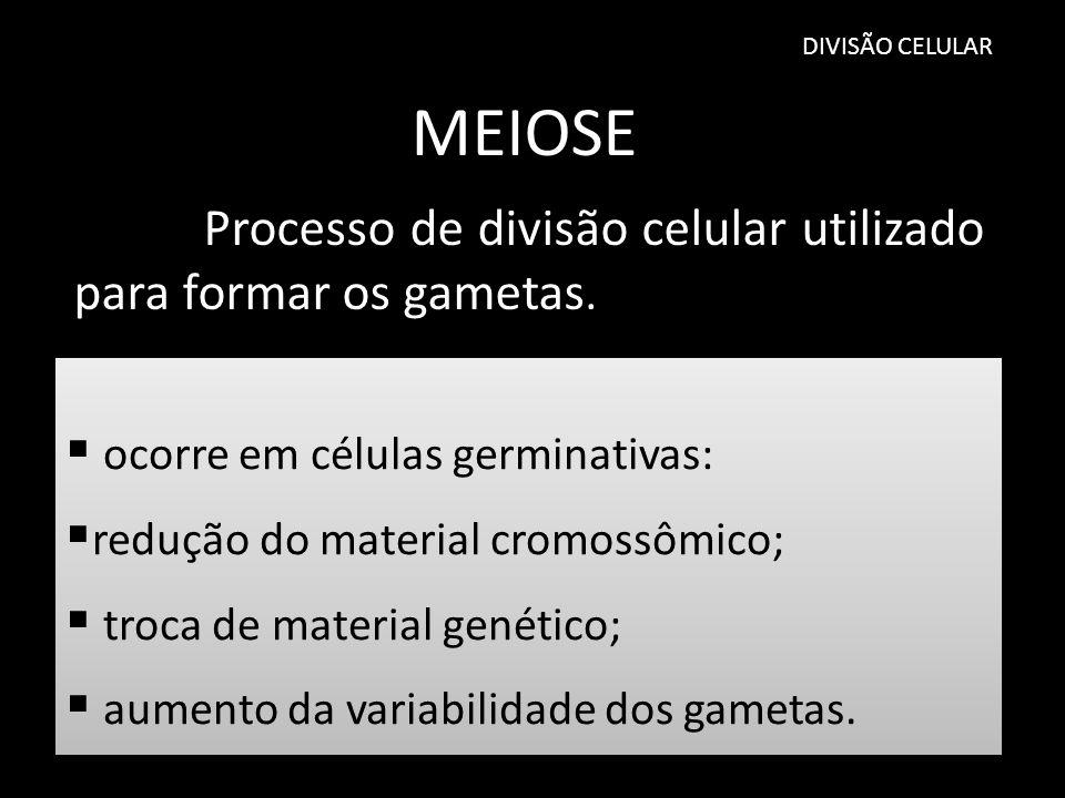 DIVISÃO CELULAR MEIOSE Processo de divisão celular utilizado para formar os gametas. ocorre em células germinativas: redução do material cromossômico;