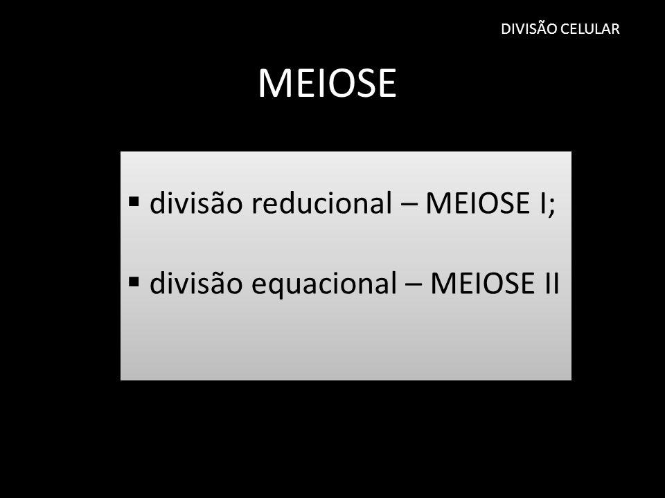 DIVISÃO CELULAR MEIOSE divisão reducional – MEIOSE I; divisão equacional – MEIOSE II divisão reducional – MEIOSE I; divisão equacional – MEIOSE II