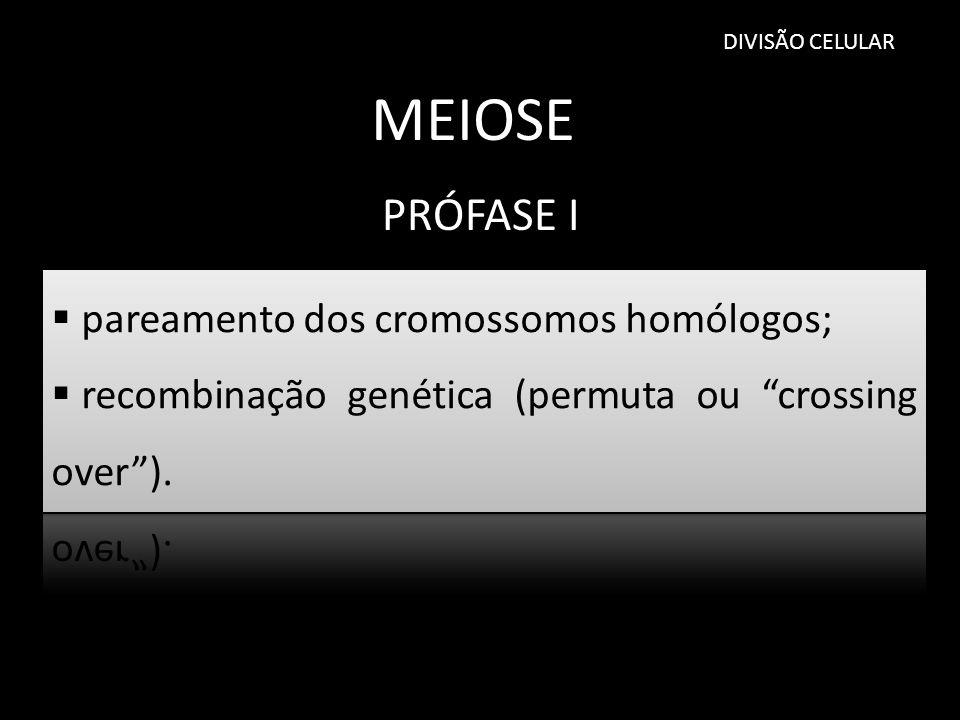 DIVISÃO CELULAR MEIOSE PRÓFASE I