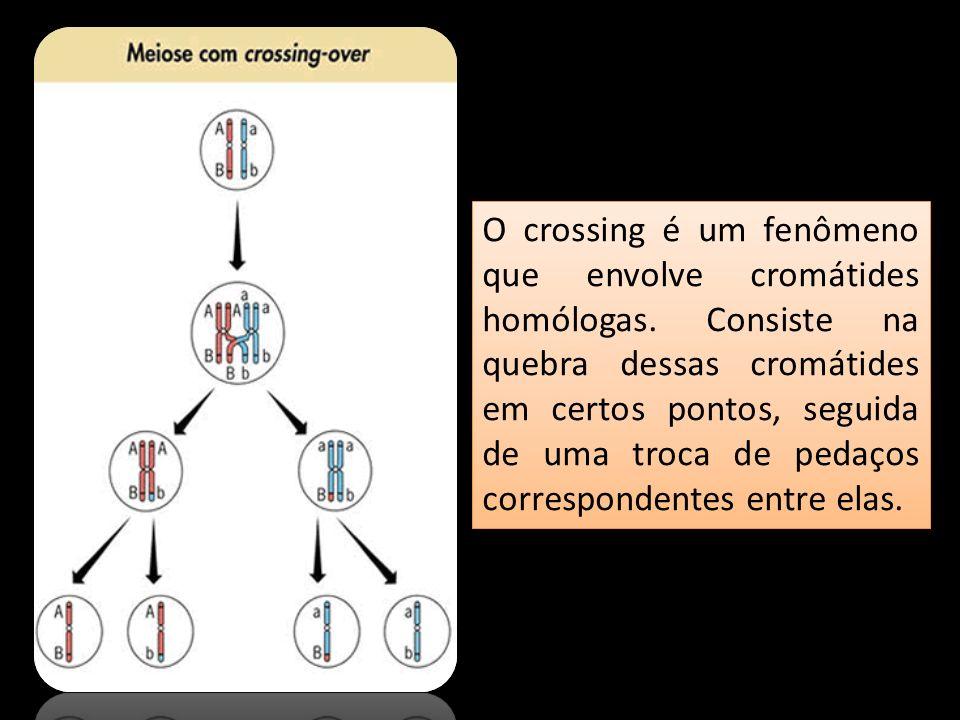 O crossing é um fenômeno que envolve cromátides homólogas. Consiste na quebra dessas cromátides em certos pontos, seguida de uma troca de pedaços corr
