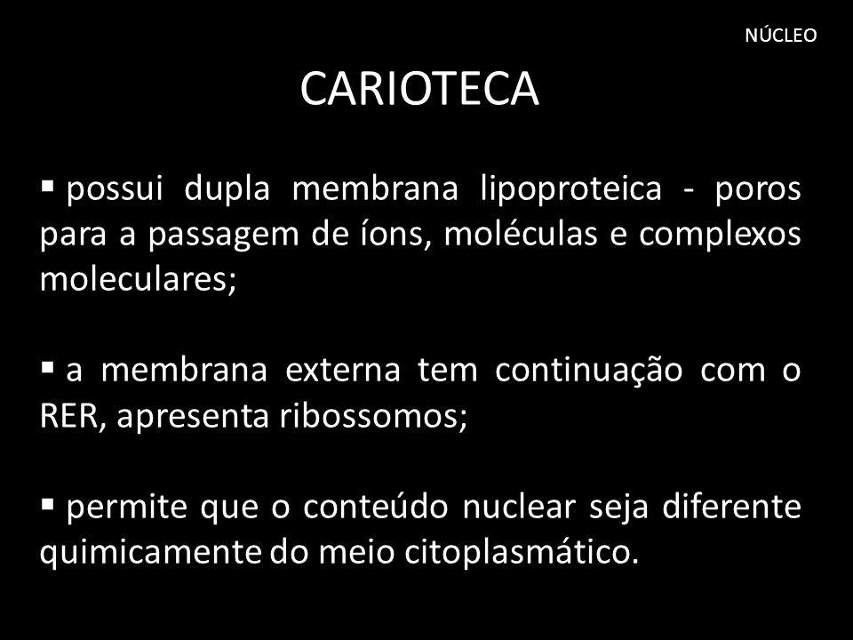 NÚCLEO CARIOTECA possui dupla membrana lipoproteica - poros para a passagem de íons, moléculas e complexos moleculares; a membrana externa tem continu