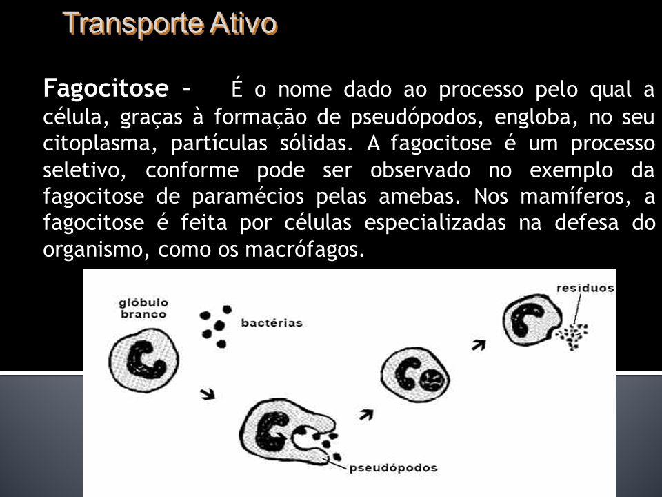 Transporte Ativo Fagocitose - É o nome dado ao processo pelo qual a célula, graças à formação de pseudópodos, engloba, no seu citoplasma, partículas sólidas.