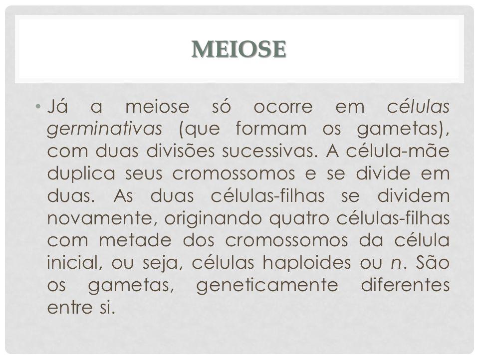 MEIOSE Já a meiose só ocorre em células germinativas (que formam os gametas), com duas divisões sucessivas. A célula-mãe duplica seus cromossomos e se