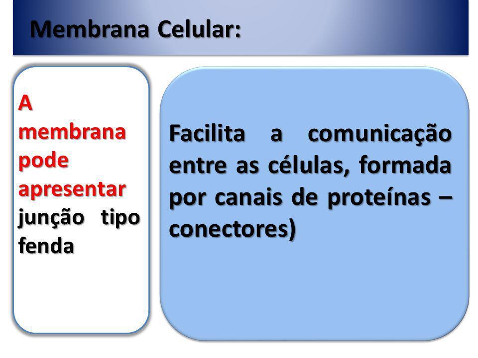 Membrana Celular: A membrana pode apresentar junção tipo fenda Facilita a comunicação entre as células, formada por canais de proteínas – conectores)