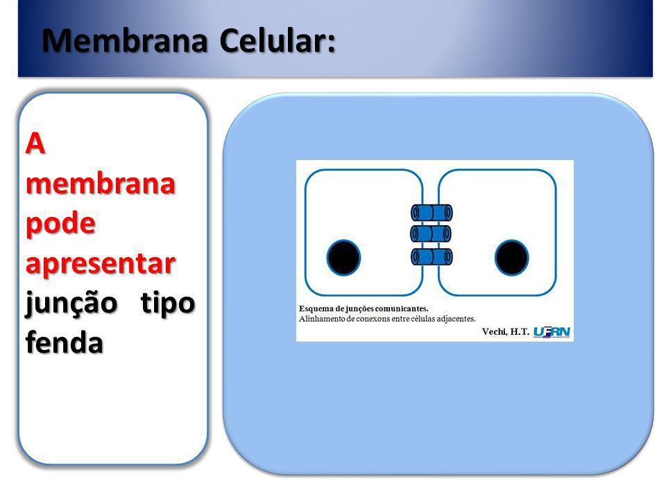 Membrana Celular: A membrana pode apresentar junção tipo fenda