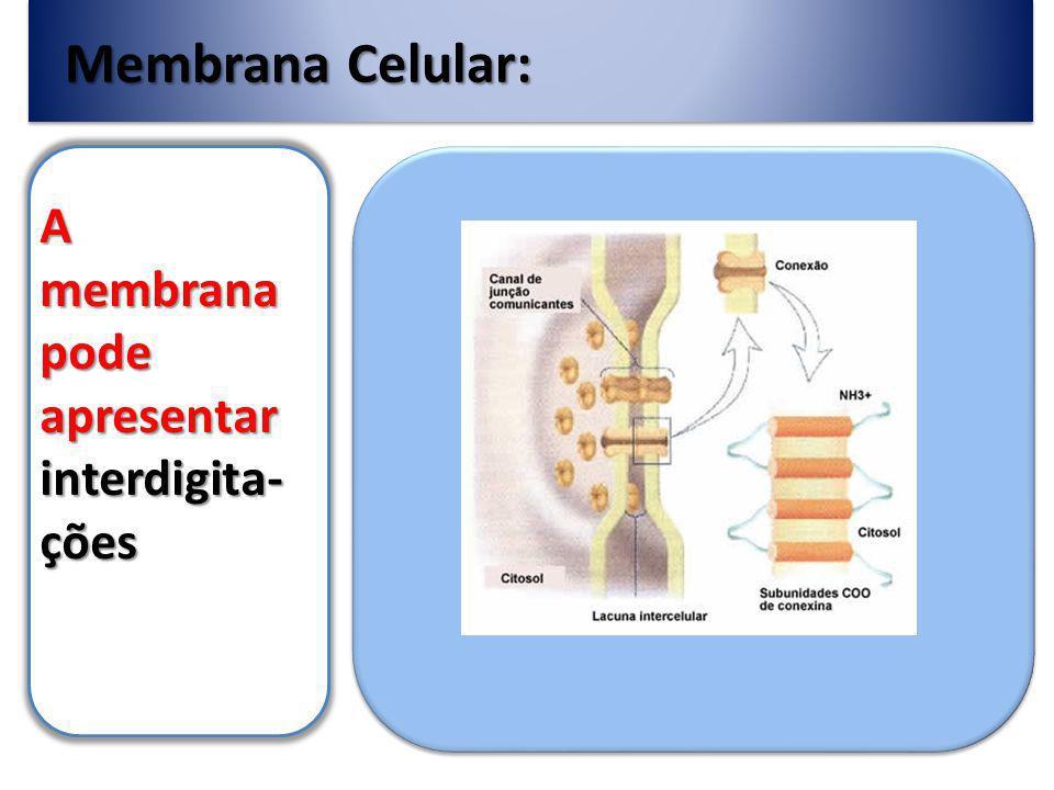 Membrana Celular: A membrana pode apresentar interdigita- ções
