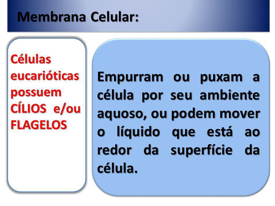 Membrana Celular: Células eucarióticas possuem CÍLIOS e/ou FLAGELOS Empurram ou puxam a célula por seu ambiente aquoso, ou podem mover o líquido que está ao redor da superfície da célula.