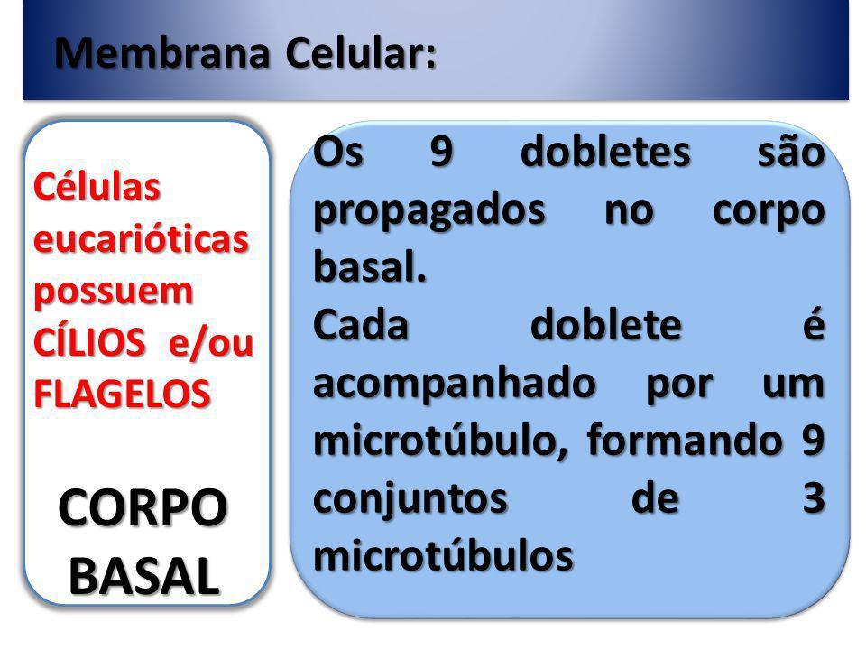 Membrana Celular: Células eucarióticas possuem CÍLIOS e/ou FLAGELOS CORPO BASAL Os 9 dobletes são propagados no corpo basal.