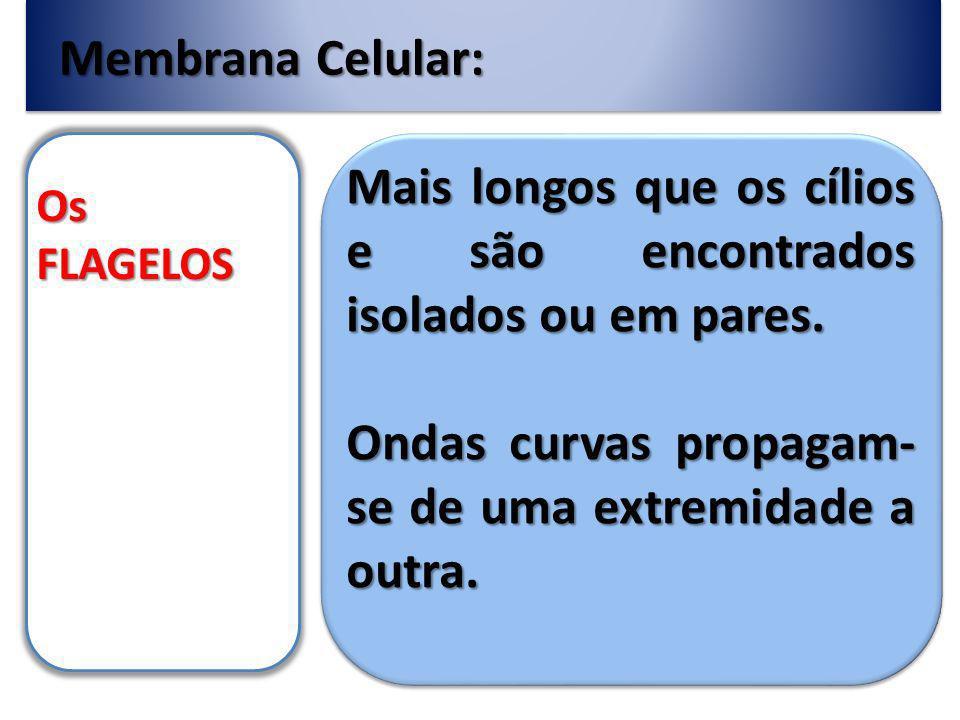 Membrana Celular: Os FLAGELOS Mais longos que os cílios e são encontrados isolados ou em pares.