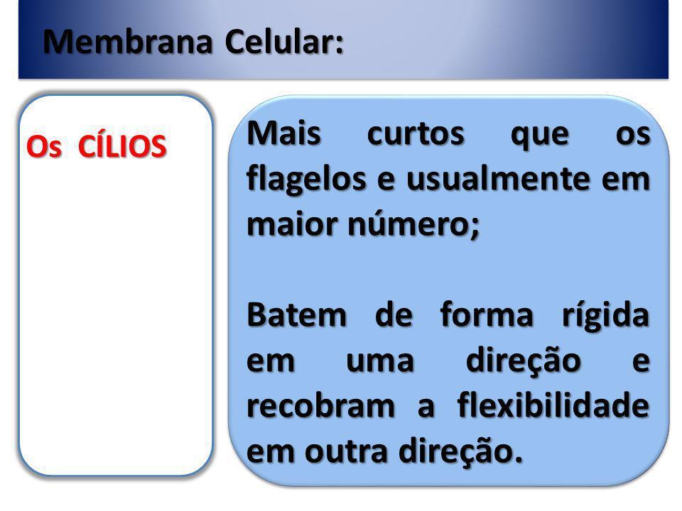 Membrana Celular: Os CÍLIOS Mais curtos que os flagelos e usualmente em maior número; Batem de forma rígida em uma direção e recobram a flexibilidade em outra direção.