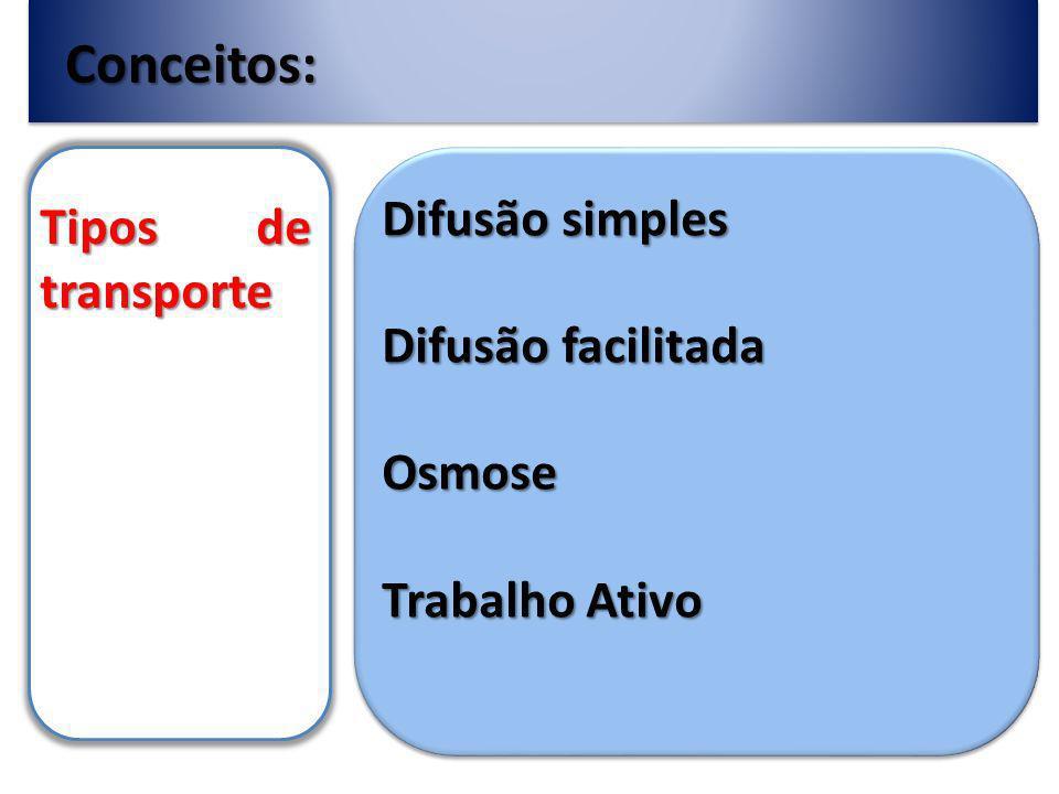 Conceitos: Tipos de transporte Difusão simples Difusão facilitada Osmose Trabalho Ativo
