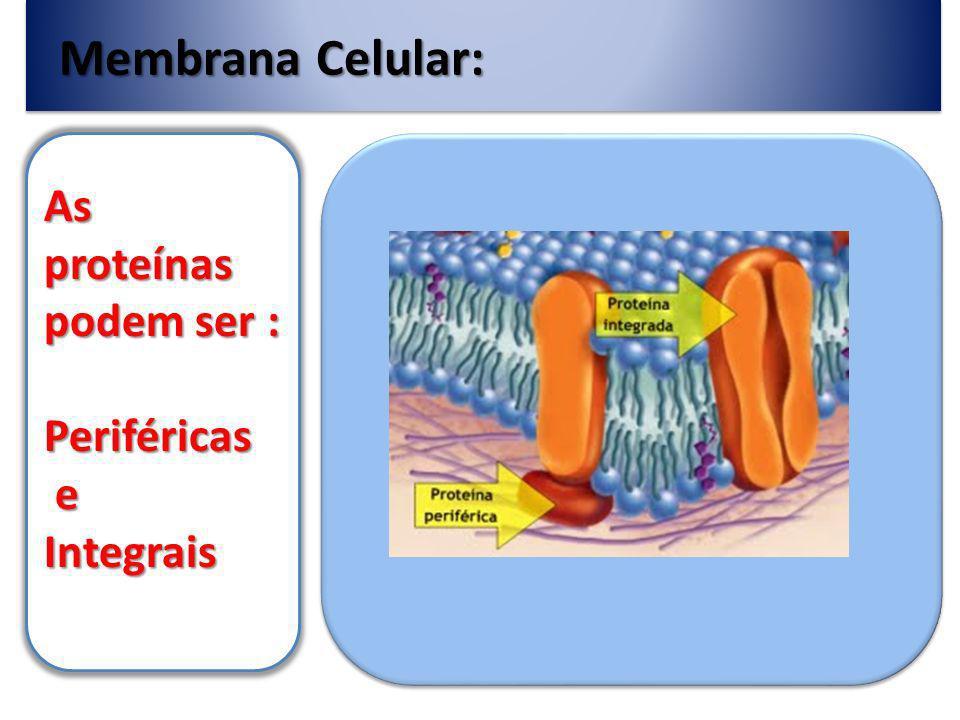 Membrana Celular: O número de proteínas varia entre as células; 75% nas mitocôndrias e cloroplastos; (1/15) 50% nas membranas celulares (1/25) 25% nos neurônios (1/70)