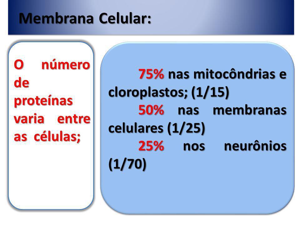 Membrana Celular: Na membrana pode-se encontrar: Oligossacarídeo – Formando o glicocálix; Colesterol – Para suporte mecânico à membrana