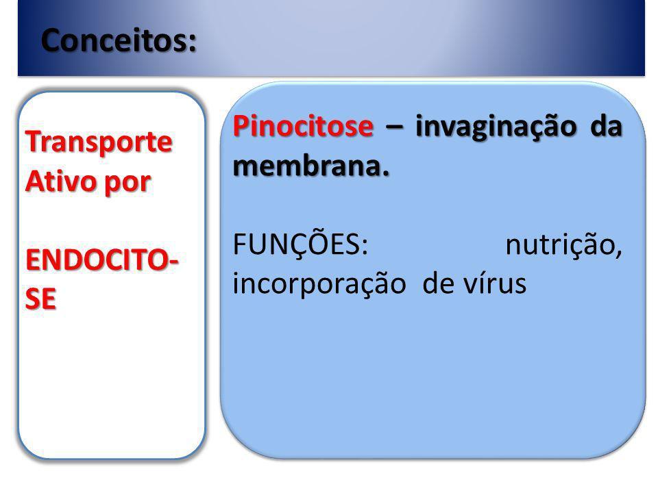 Conceitos: Transporte Ativo por ENDOCITO-SE Pinocitose – invaginação da membrana.