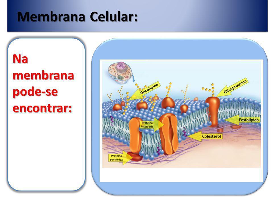 Membrana Celular: Na membrana pode-se encontrar: